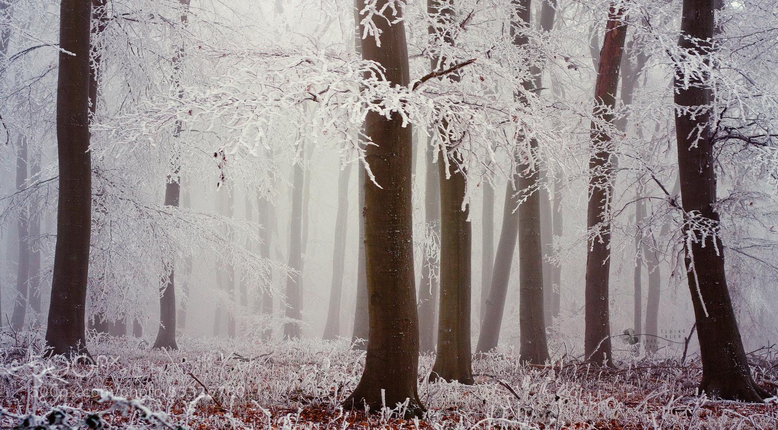 Photograph White Saints by Ildiko Neer on 500px
