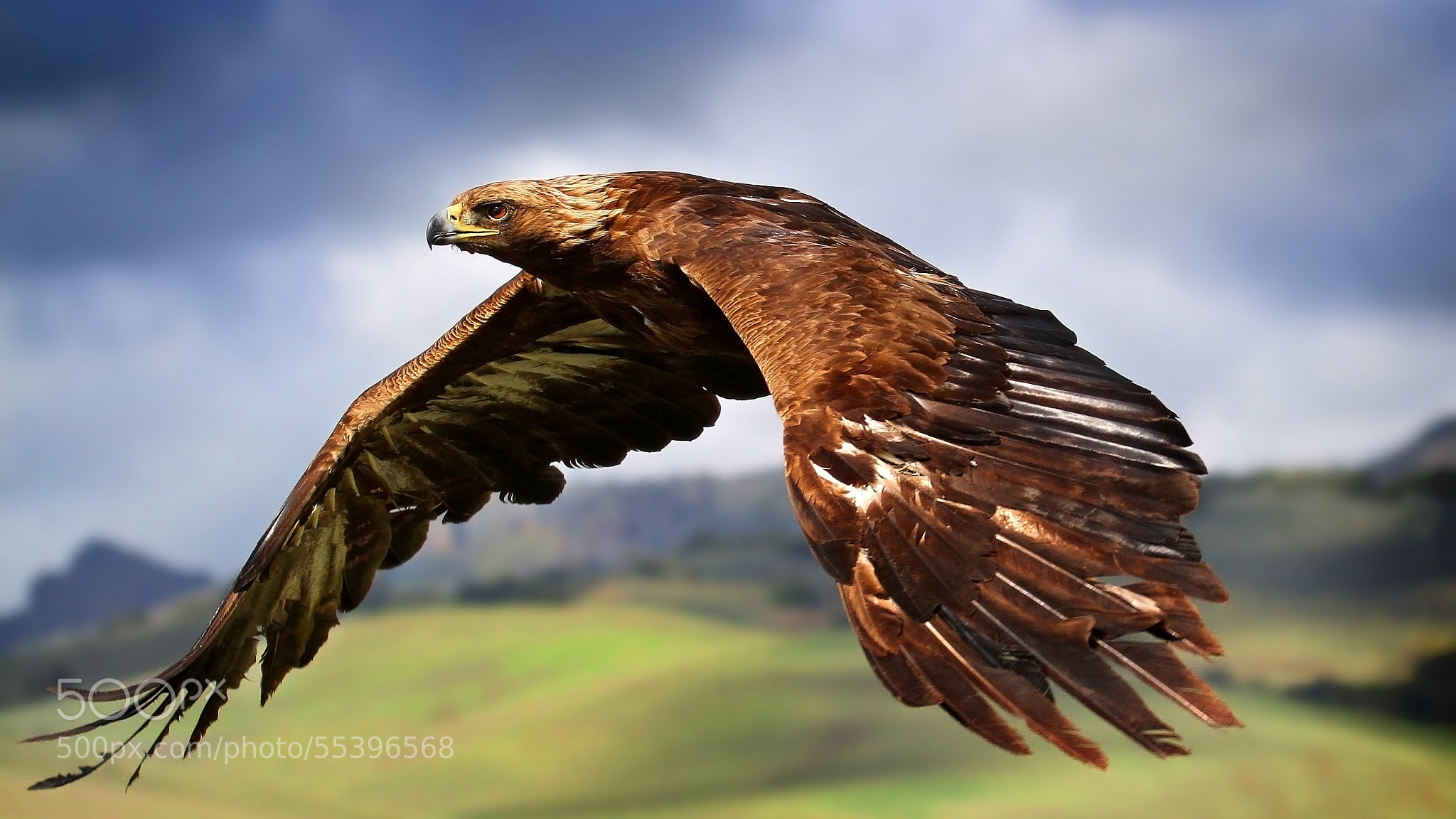 Photograph fly high by hinler  on 500px