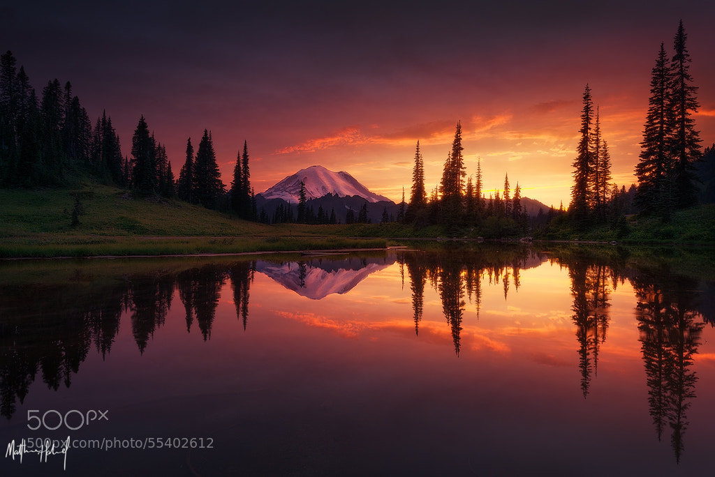 Photograph Growth by Matthew Hahnel on 500px