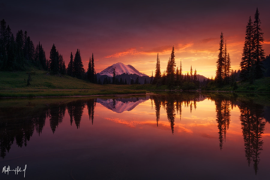 Growth by Matthew Hahnel on 500px