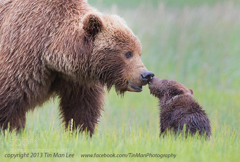 Photograph Bear Kiss by Tin Man on 500px