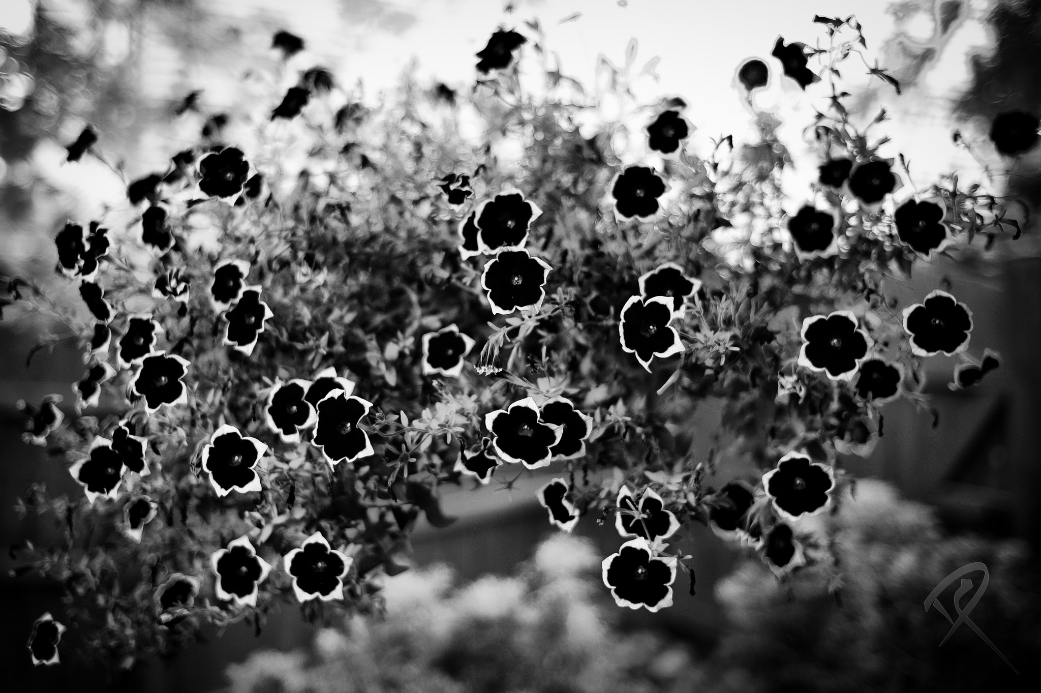 Photograph The Garden by David Miskinyar on 500px