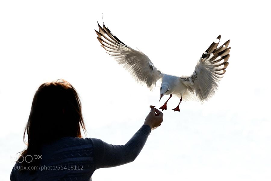 Hand Feeding.
