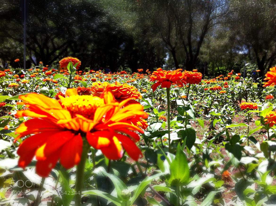 Photograph Flower by Marcelo Molina on 500px