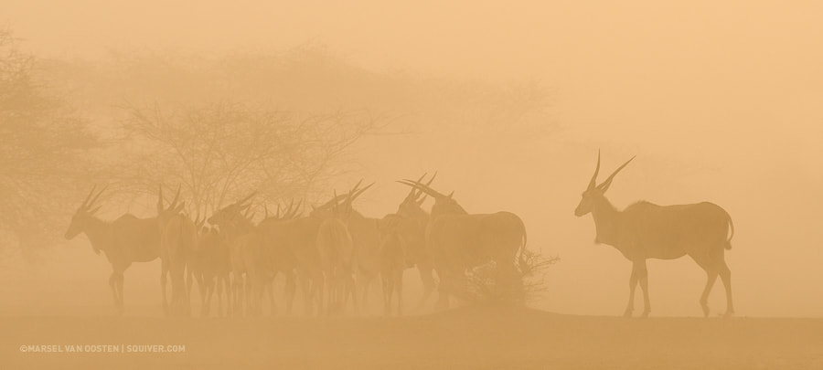 Photograph Sand Storm by Marsel van Oosten on 500px