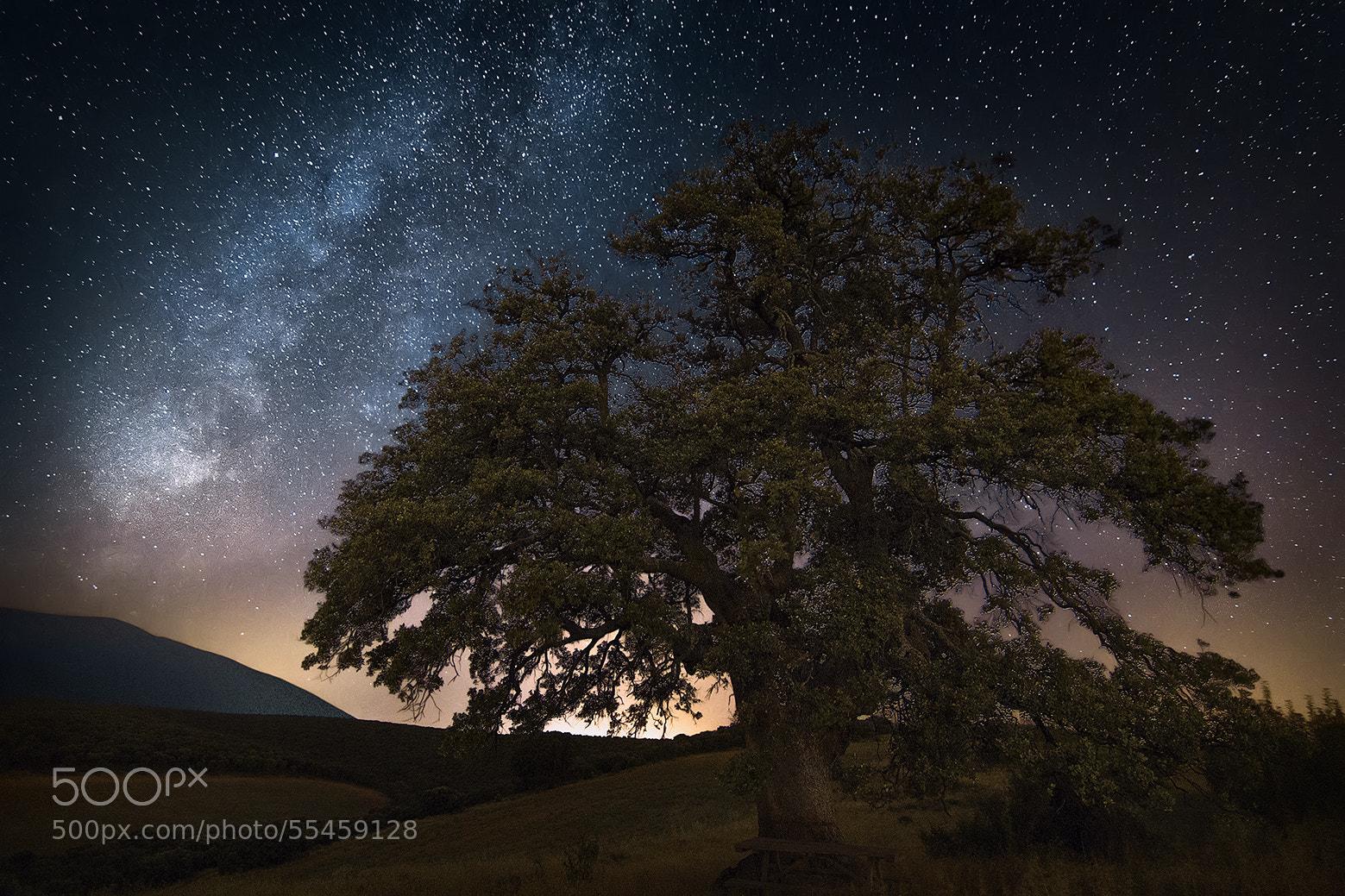 Photograph Oak under milky way by Guillermo  García Delgado on 500px