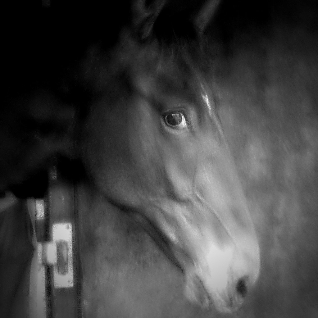 Photograph all the pretty horses by Marc Melander on 500px