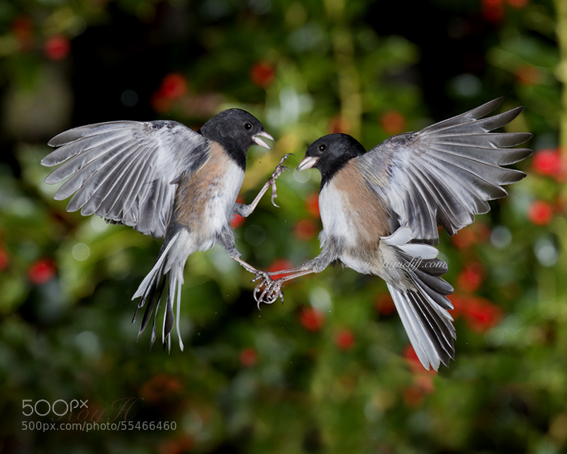 """Photograph """"PLAYING IN THE BERRIES"""" by Roy Hancliff on 500px"""