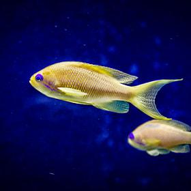 Fisch | Fish