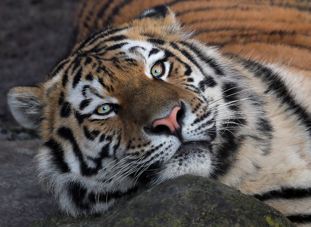 Photograph Look into my eyes by Klaus Wiese on 500px