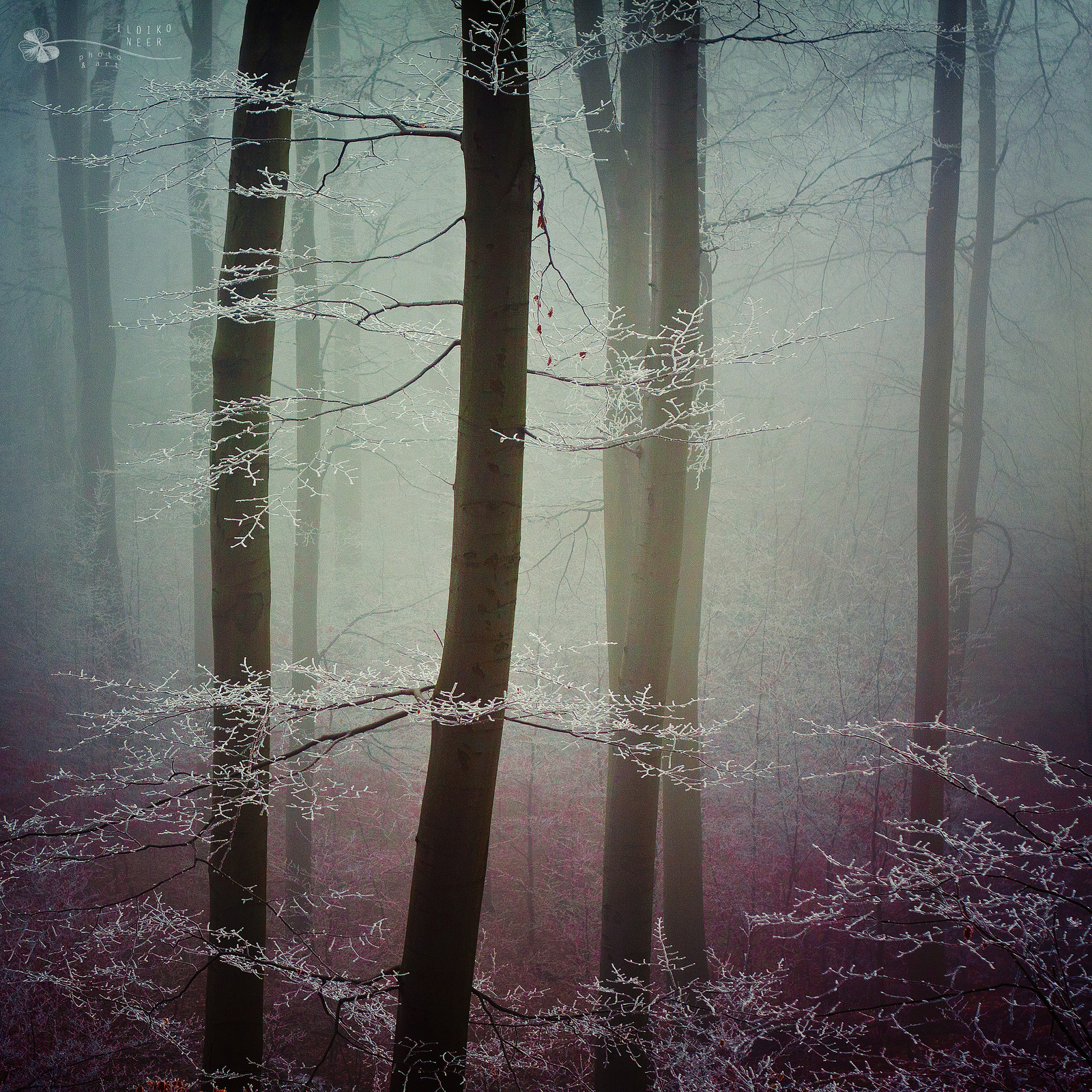 Photograph Lady by Ildiko Neer on 500px