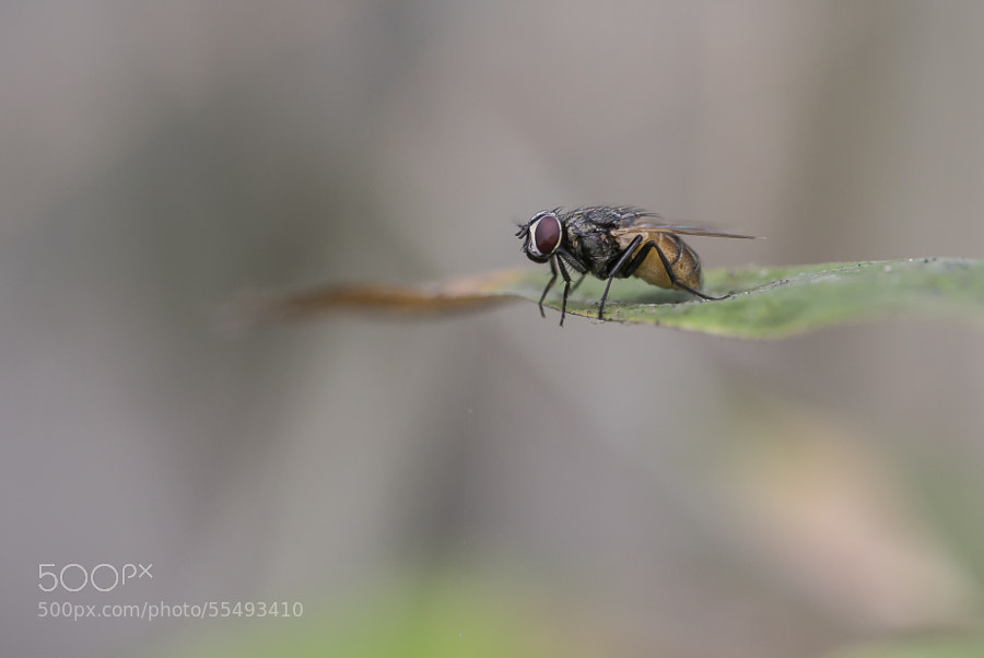 Photograph </p> <p>Just a little fly ... by Amine Fassi on 500px