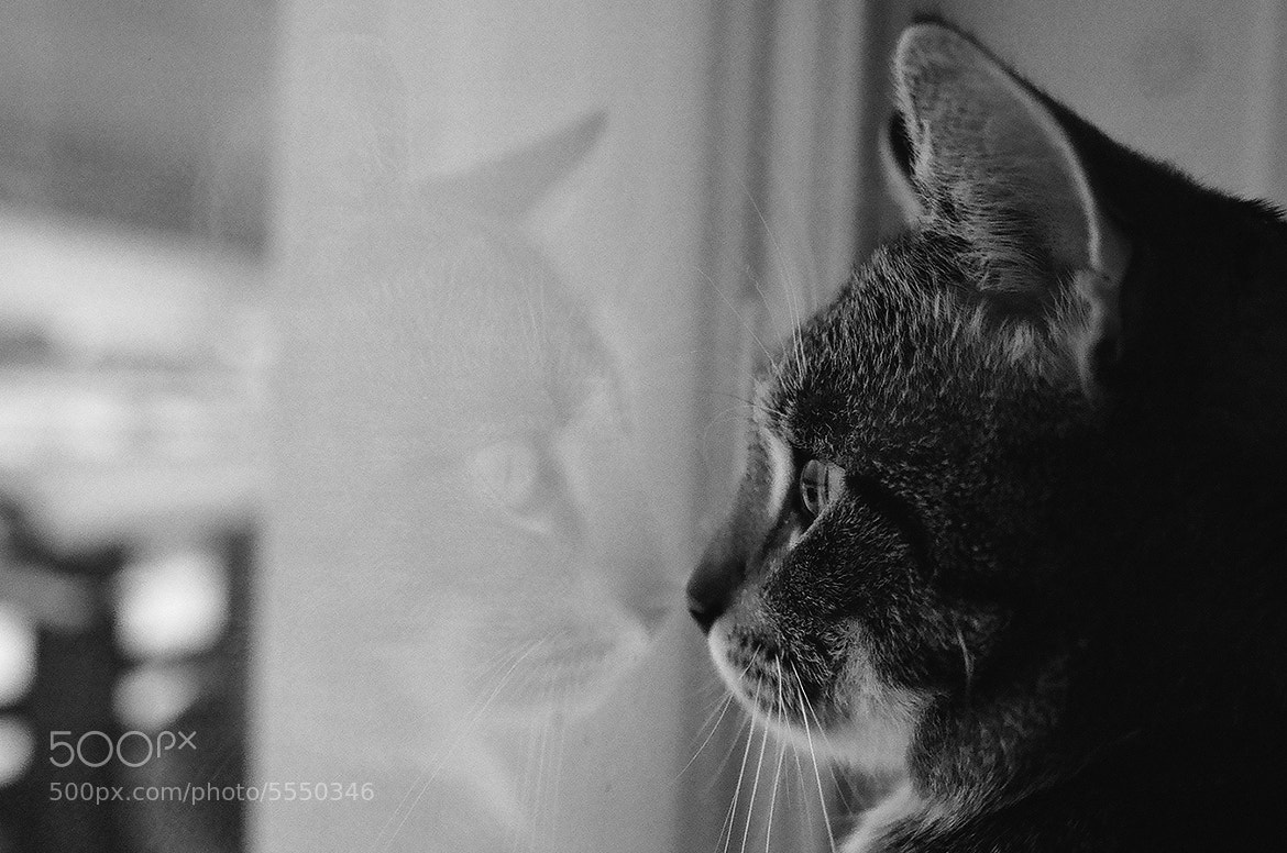 Photograph Сat and cat by Muarina  on 500px