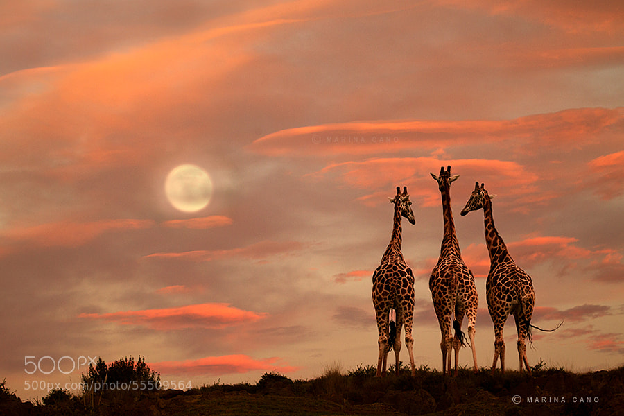 Photograph MOONRISE by Marina Cano on 500px