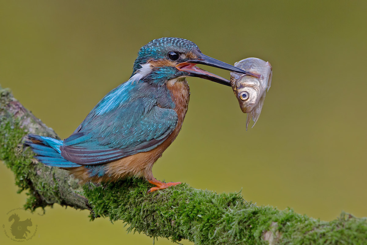 Photograph The big catch by Theo Vanden Wyngaert on 500px