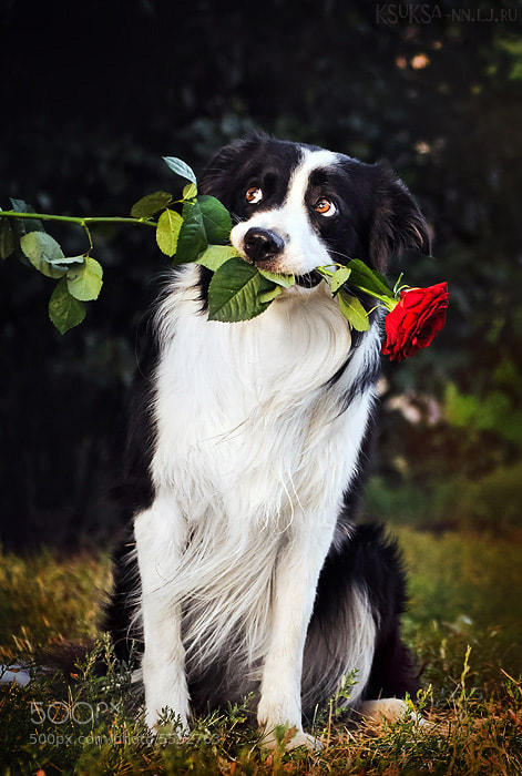 Photograph Gentleman by Ksenia Raykova on 500px
