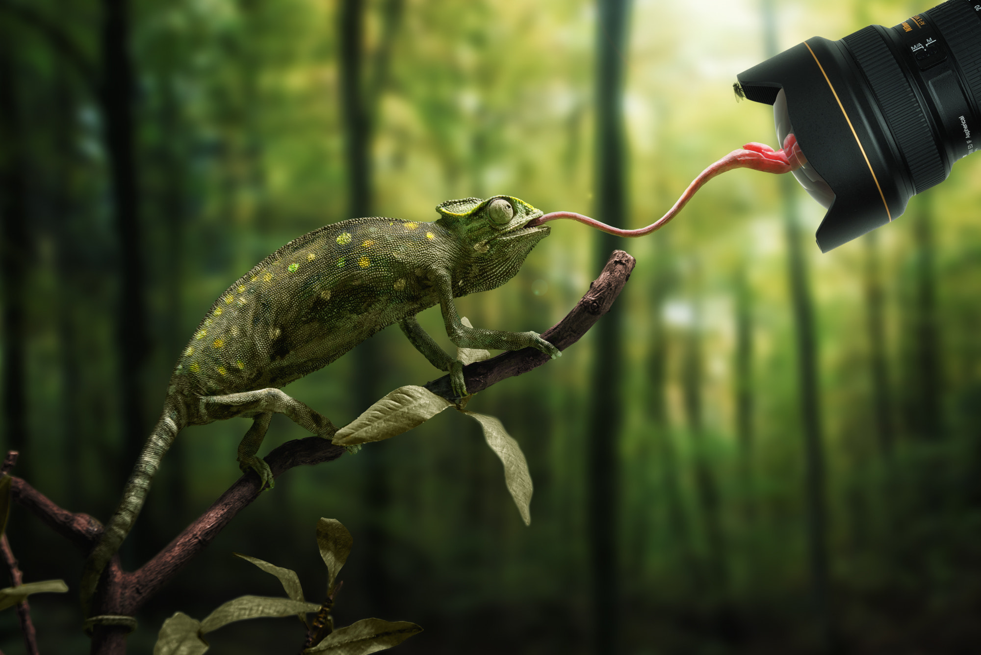 Photograph Just a chameleon action shooting with bait-lens by John Wilhelm is a photoholic on 500px