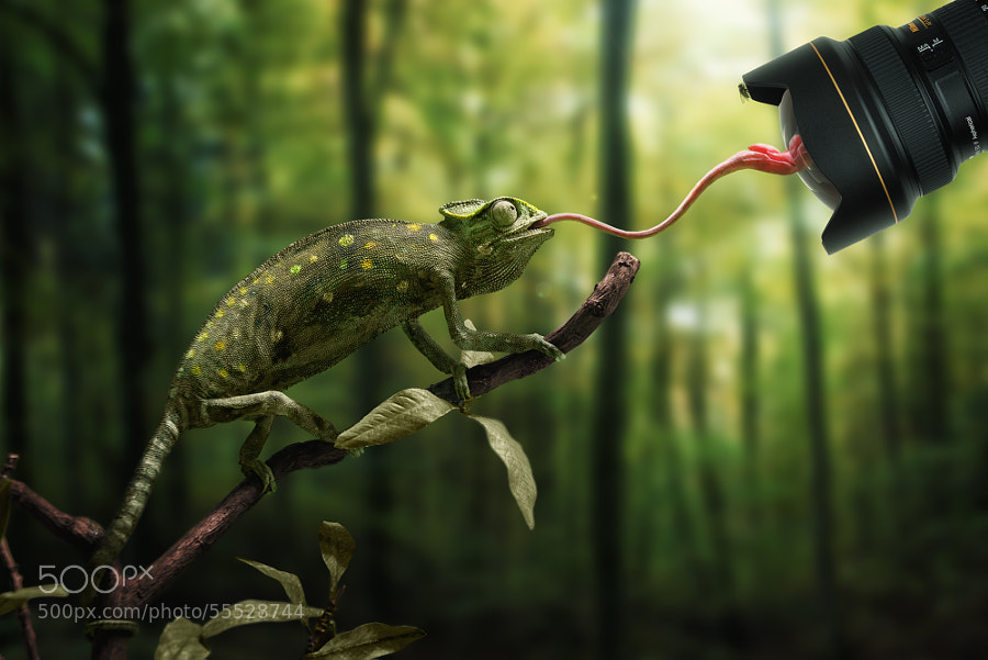 Photograph Just a chameleon action shooting with bait-lens by John Wilhelm on 500px