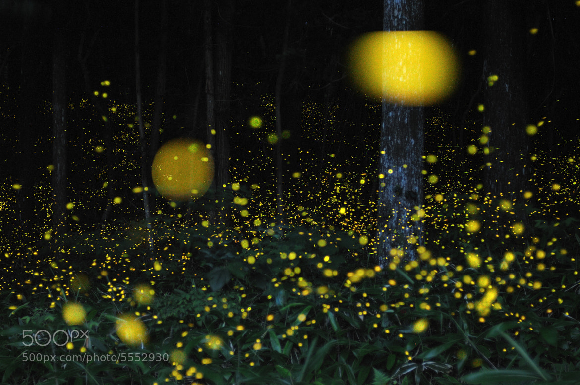 Photograph Firefly by Tsuneaki Hiramatsu on 500px