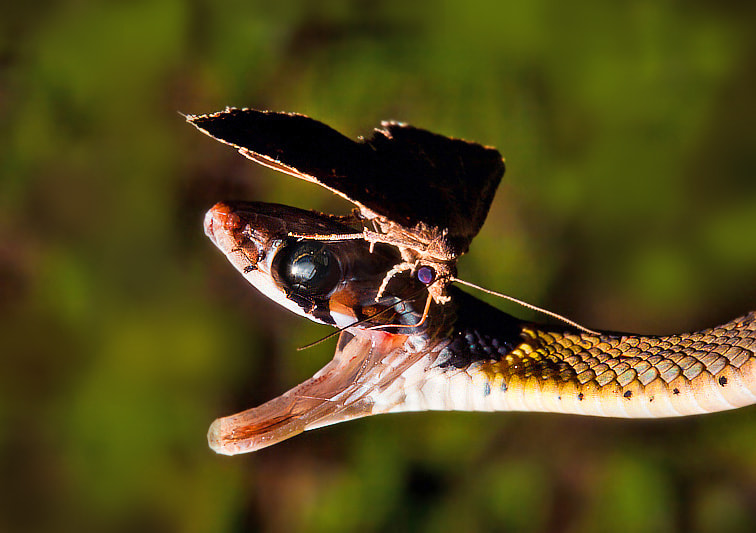 Photograph butterfly and snake by Khatawut J on 500px