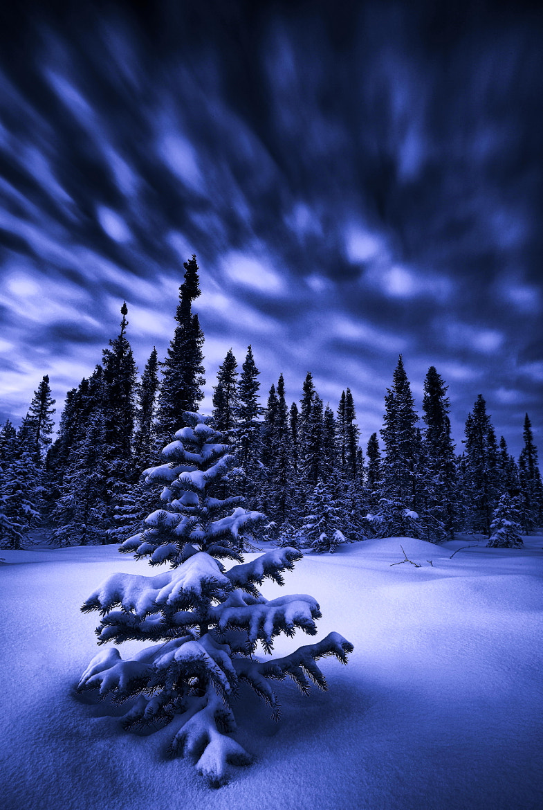 Photograph Blue, blue blue blue Christmas by Ron Perkins on 500px
