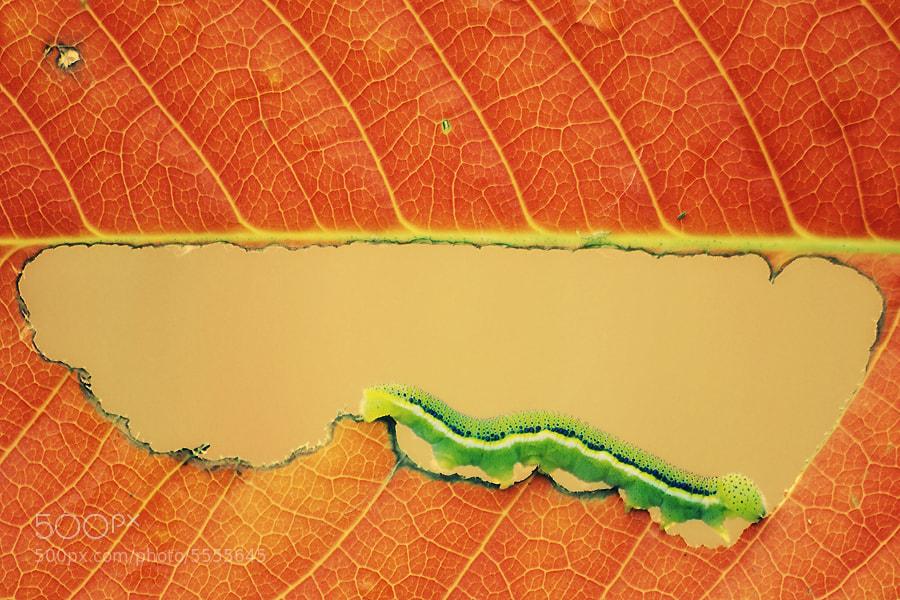 Photograph Autumn Road by Arief Perdana on 500px