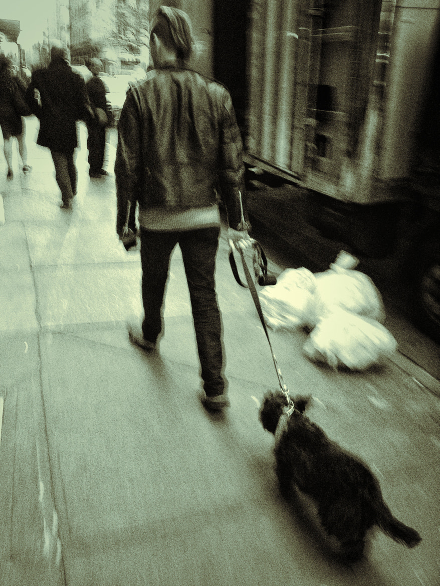 Photograph These Dogs are Made for Walking by Dave Ortiz on 500px
