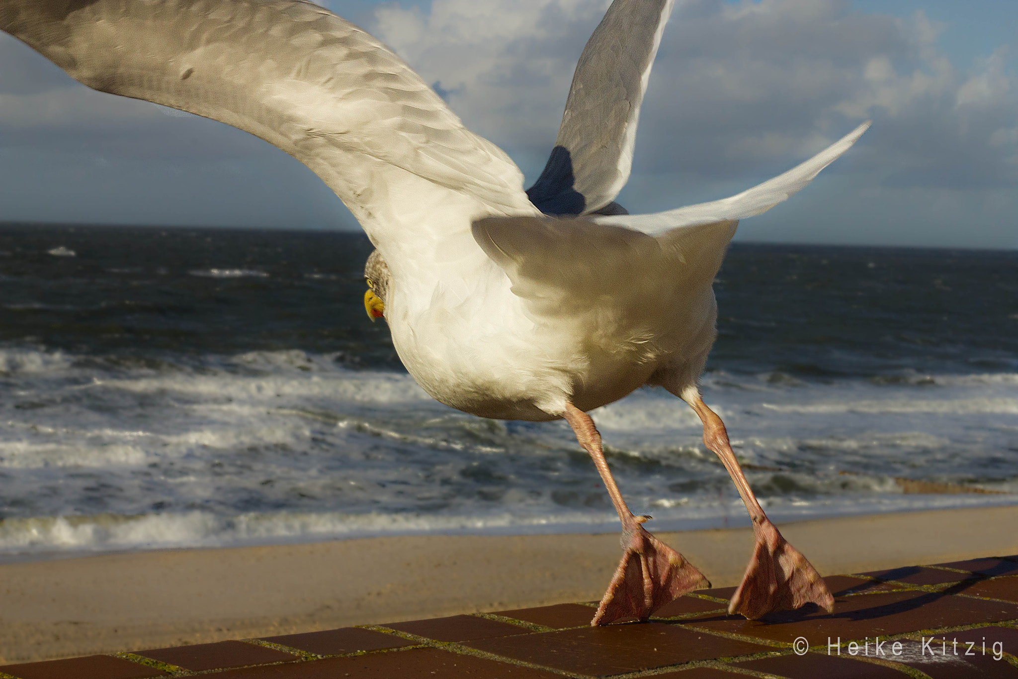 Photograph Seagull 6 by Heike Kitzig on 500px