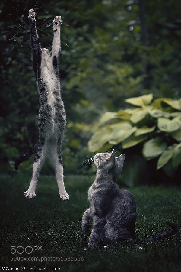 Photograph Freedom!!! by Zoran Milutinovic on 500px
