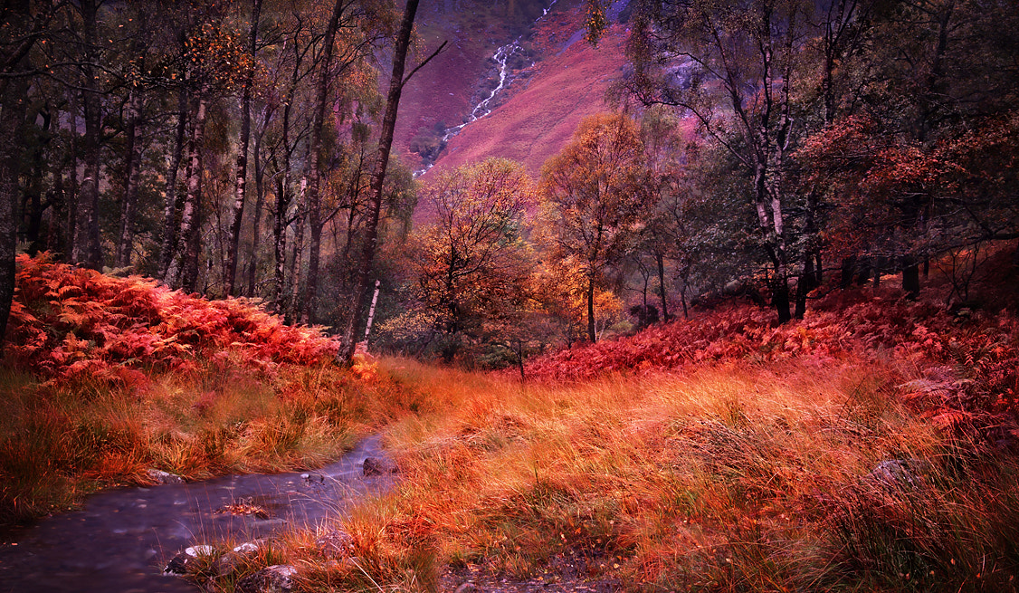 Photograph Autumn Colours by Ceri Jones on 500px