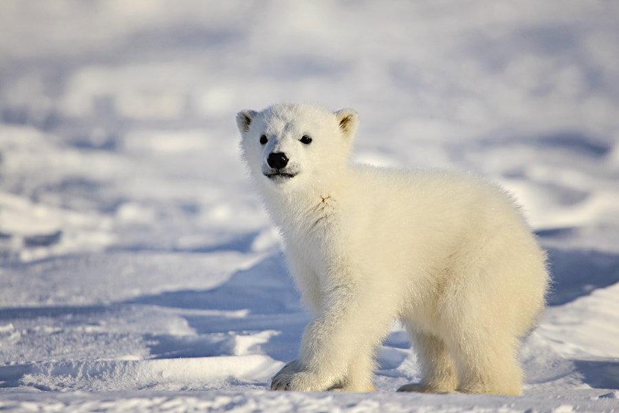 30 Cute Baby Animal Photos Found In The Wild - 500px