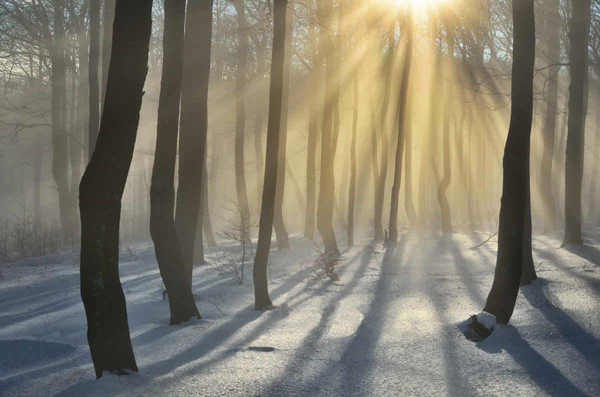 Photograph Winter Rays by Peter Kováč on 500px