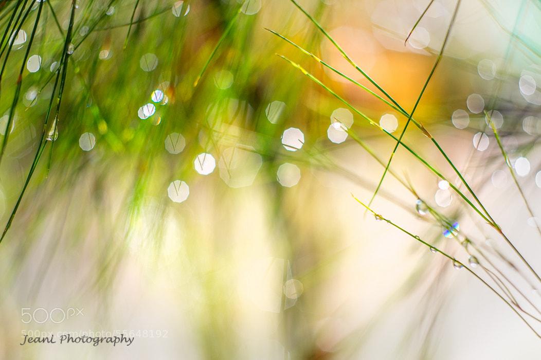 Photograph waterdrops by Jean Li on 500px