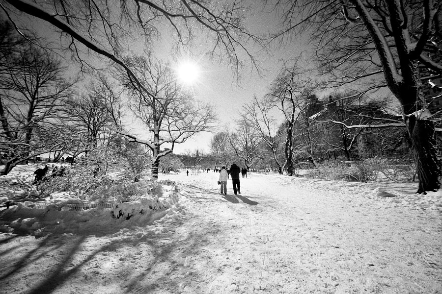 Photograph Bridle Path, Central Park by Bill Montgomery on 500px