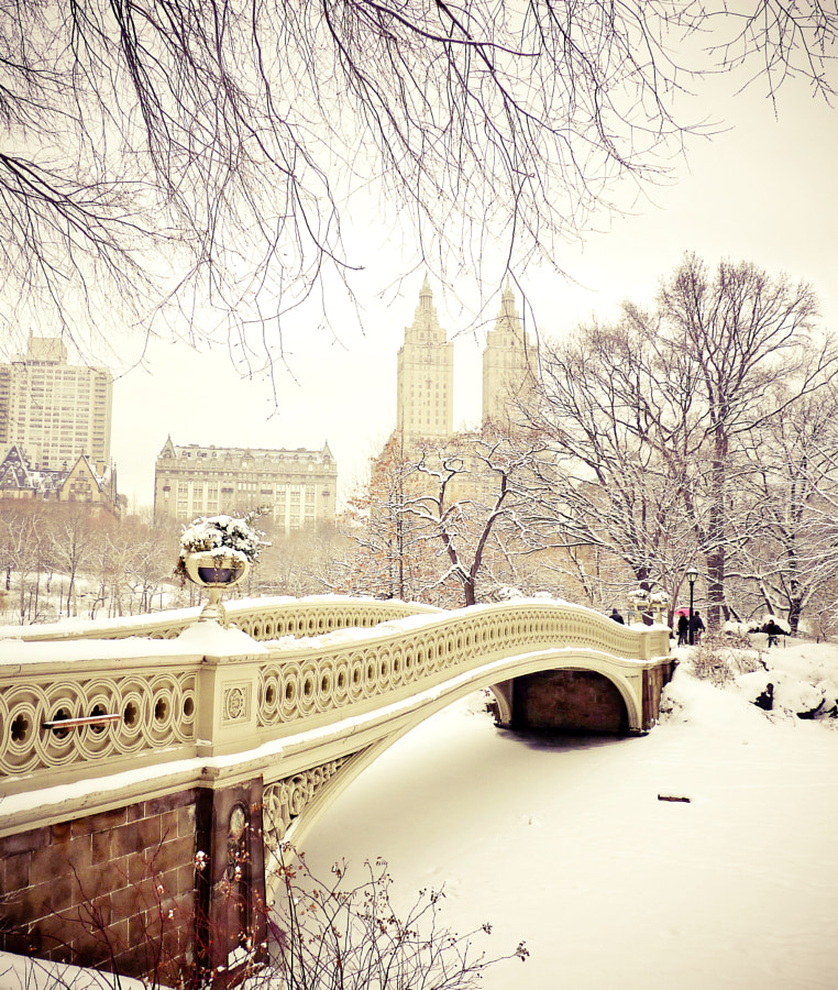 Photograph Winter Wonder - Central Park - New York City by Vivienne Gucwa on 500px