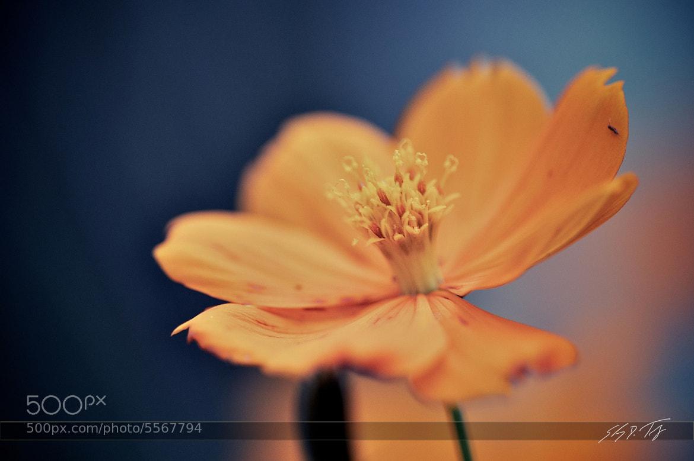 Photograph Feeling a Bit Orange by Shawn Truesdell on 500px