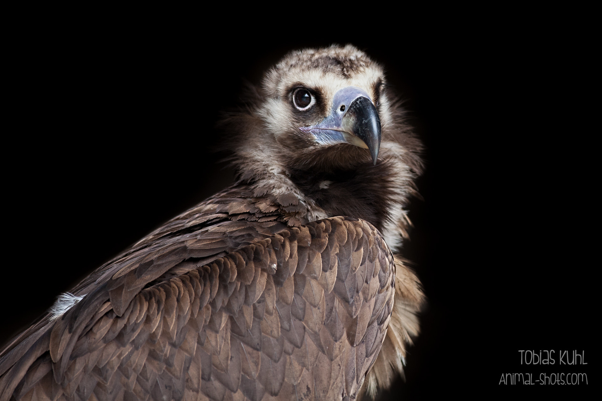 Photograph Beast by Tobias Kuhl on 500px