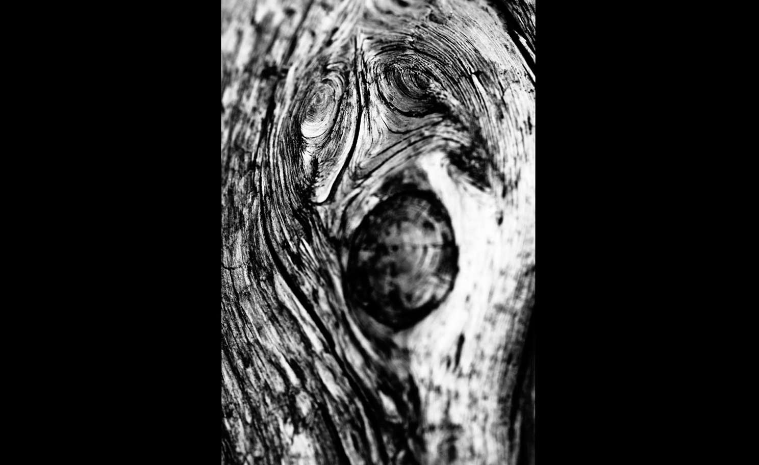 Photograph Faces in the Wood #007 by Andrew Walsh Photography on 500px