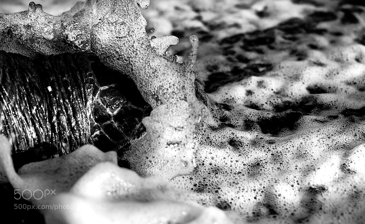 Photograph Turtle in the Surf by Andrew Walsh Photography on 500px