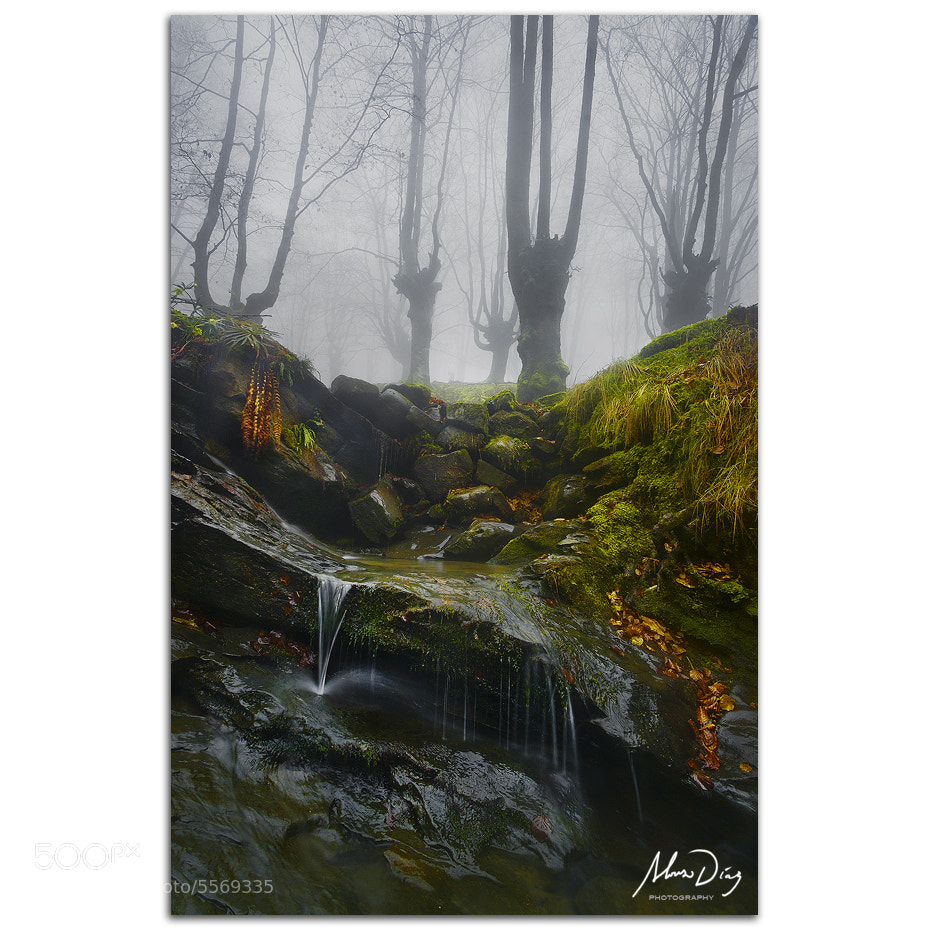 Photograph Slippery when wet by Alonso Díaz on 500px