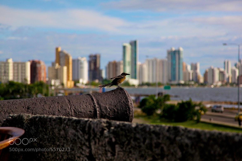 Photograph Cartagena Cannon + Bird by Neil  Tan on 500px