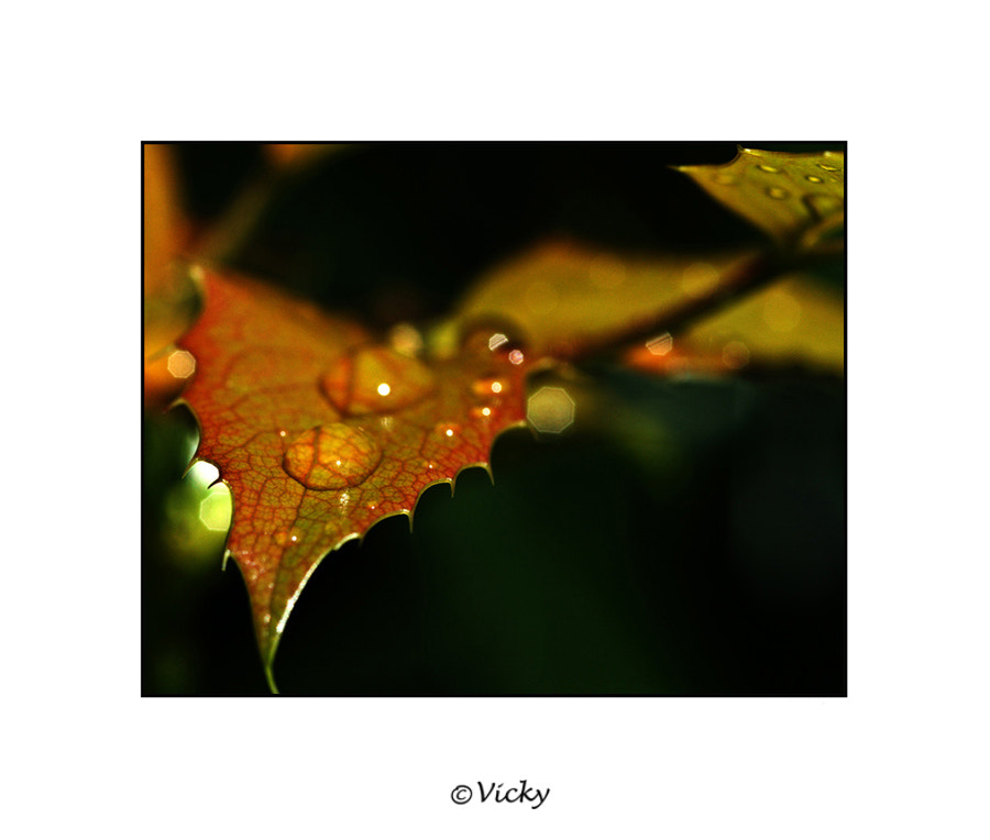 Photograph drops by Vicky Dens on 500px