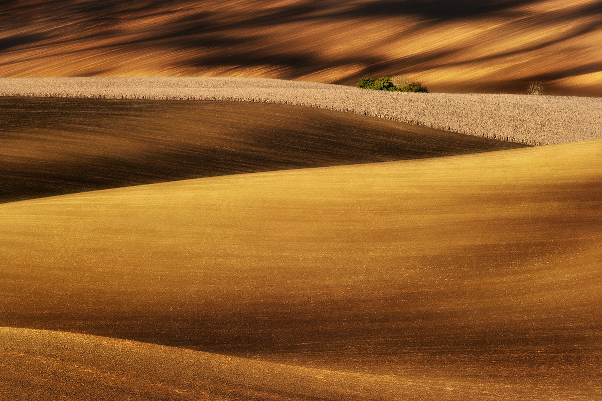 Photograph Amber fields... by Pawel Kucharski on 500px
