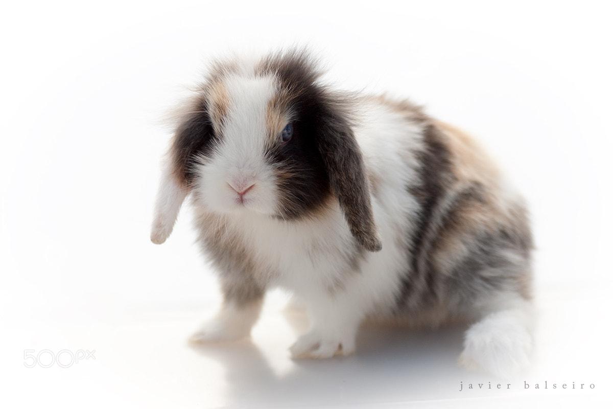 Photograph Rabbit by javier balseiro on 500px