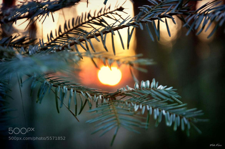Photograph Evening in the forest by Viktor Korostynski on 500px