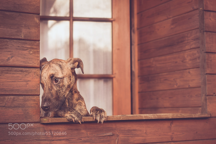 Photograph Waiting for Santa by Elke Vogelsang on 500px