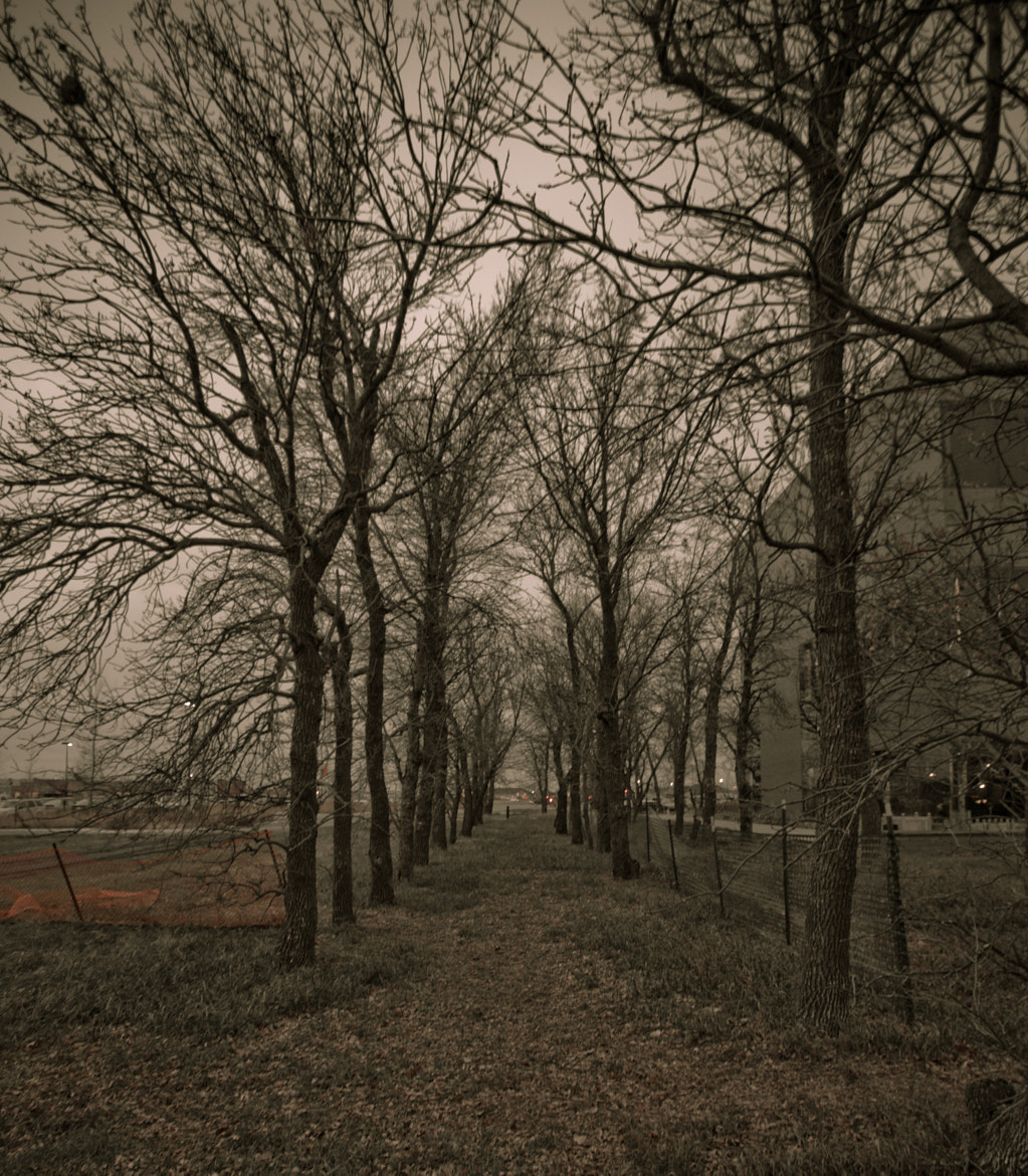 Photograph Trees by Jordan Hofker on 500px
