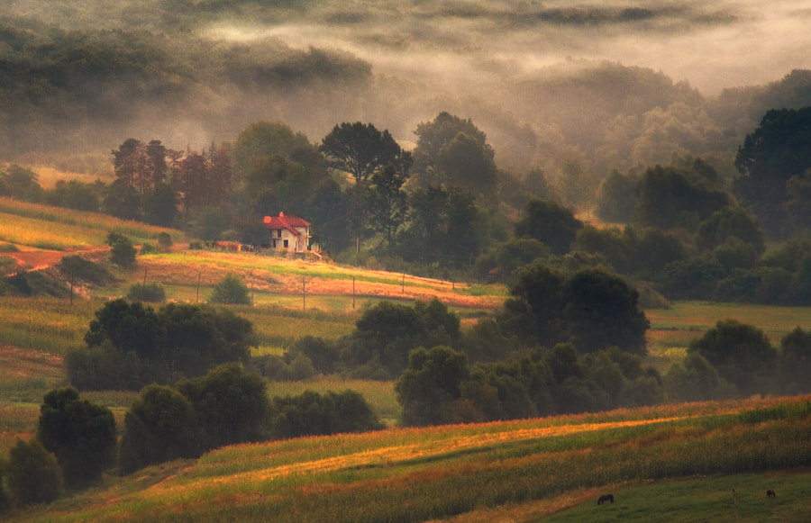 Photograph summer morning  by alexandru popovschi  on 500px