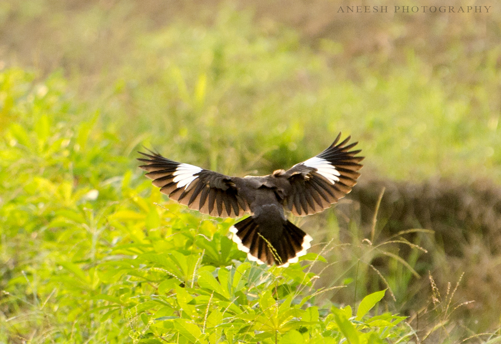 Photograph Perfect Landing by Aneesh BR on 500px