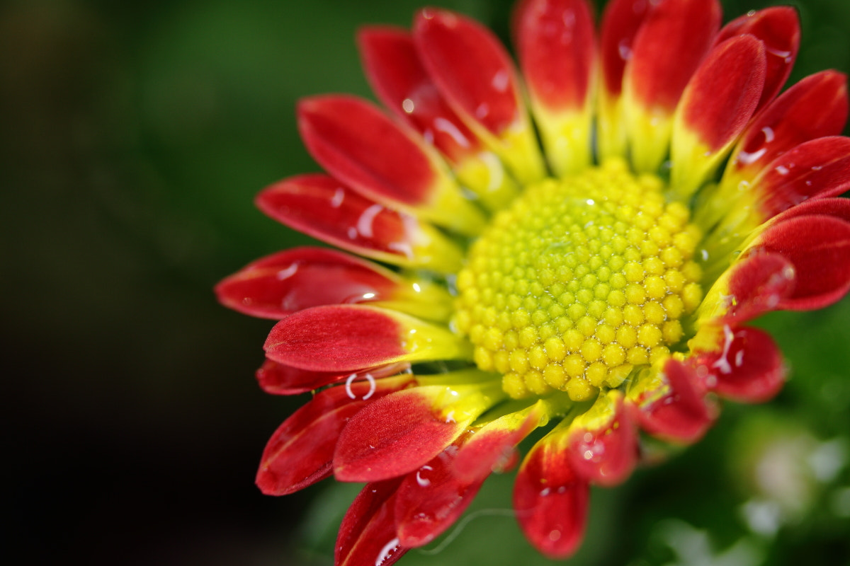 Photograph Macro ring light by Bing the Park on 500px